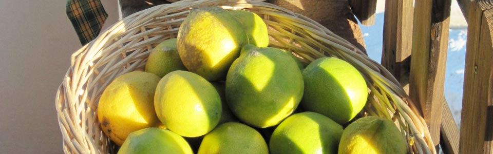 citroenen uit eigen boomgaard