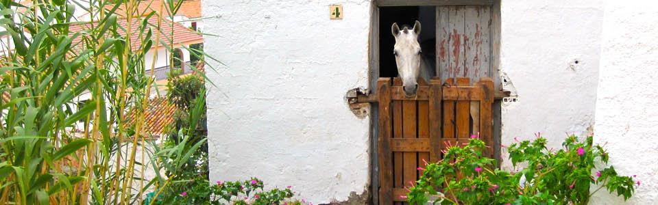 Stal met paard