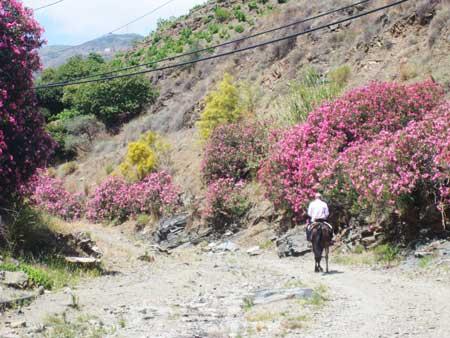 Echt Andalusie wandeling in de droge Rio Borge