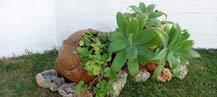 vetplant-in-gezellige-tuin