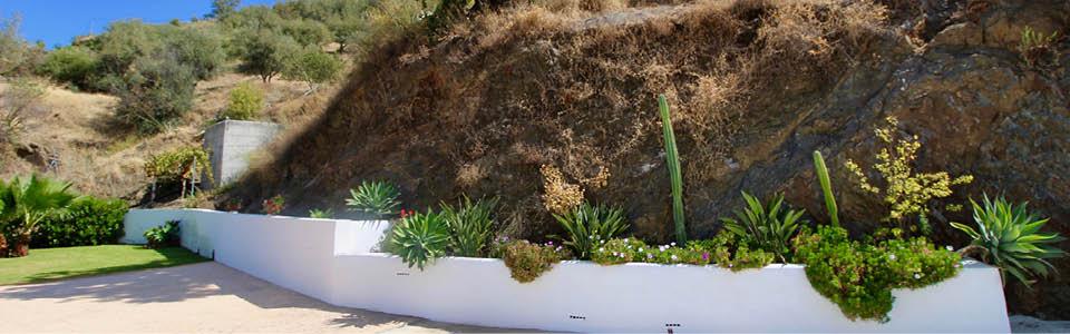 tropische planten