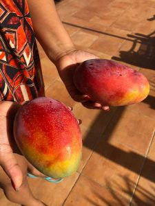 mango's uit Spanje